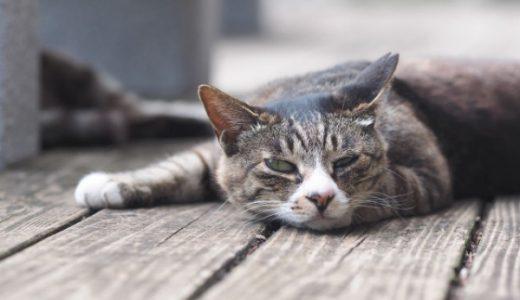【猫好き必読】おすすめの猫小説・エッセイ15作品