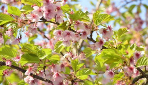 【歌野晶午】「葉桜」以外のおすすめミステリー小説5選