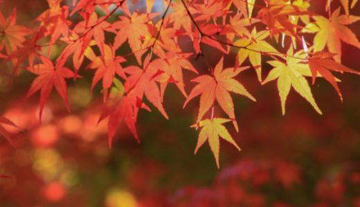 【2015秋アニメ】絶対見るべきおすすめアニメの原作12選【ラノベ】
