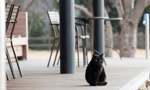 【書店猫ハムレット】アリ・ブランドンさんのミステリー小説をおすすめしたい!