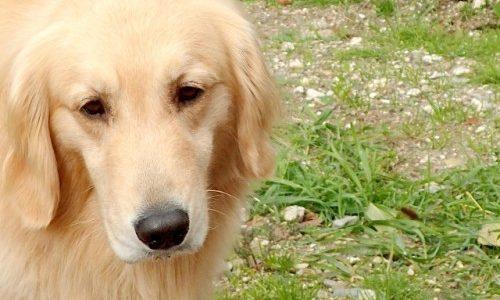 【犬になった死神】知念実希人『優しい死神の飼い方』が感動でミステリーで面白くて