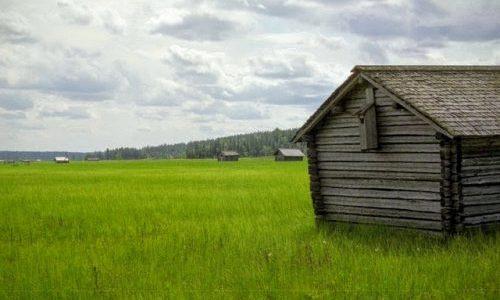 【湿地】北欧ミステリの名作『エーレンデュル警部シリーズ』のススメ【緑衣の女】